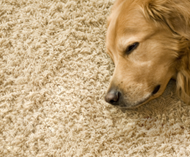 pet odors and stains